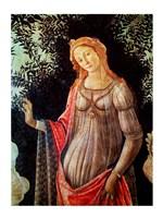 Framed Primavera, detail of Venus, c.1478