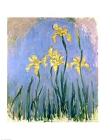 Framed Yellow Irises, c.1918-25