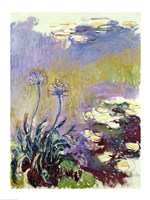 Framed Agapanthus, 1914-17