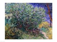 Framed Lilac Bush, 1889