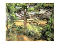 Framed Large Pine, 1895-97