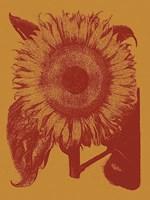 Framed Sunflower 15