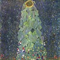 Framed Sunflower, c. 1906-1907