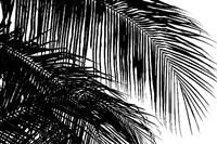 Framed Palms 3