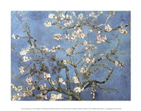 Framed Almond Blossom, 1890
