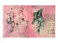 Framed Anatomical drawing of hearts and blood vessels