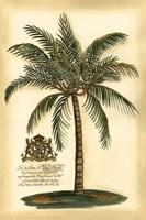 Framed British Colonial Palm III