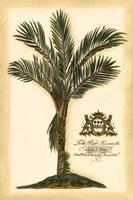 Framed British Colonial Palm IV