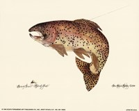 Framed Brown Trout