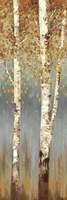Framed Butterscotch Birch Trees II
