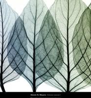 Framed Celosia Leaves I