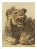 Framed Lion Snarling