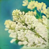 Framed Natures Lilac Blossom