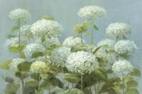 Framed White Hydrangea Garden