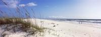 Framed Tall grass on the beach, Perdido Key Area, Gulf Islands National Seashore, Pensacola, Florida, USA