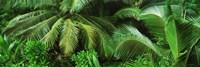 Framed Palm fronds and green vegetation, Seychelles
