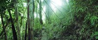 Framed Light through a Bamboo forest, Chiang Mai, Thailand