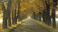 Framed Road w/Autumn Trees Sweden