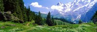 Framed Alpine Scene Near Murren Switzerland