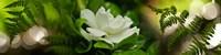 Framed Fern with magnolia