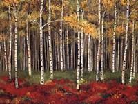 Framed Aspen Forest
