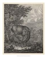Framed Woodland Deer IV