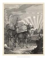 Framed Woodland Deer V