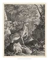 Framed Woodland Deer VII