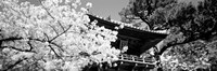 Framed Golden Gate Park, Japanese Tea Garden (black & white)