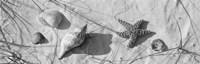 Framed Close-up of a starfish and seashells on the beach, Dauphin Island, Alabama, USA