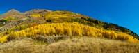 Framed Aspen trees on mountain, Alpine Loop Scenic Backway, San Juan National Forest, Colorado, USA