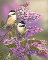 Framed Lilacs and Chickadees