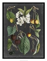 Framed Orchard Varieties II