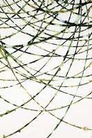Framed Moss Vine