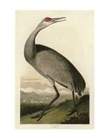 Framed Hooping Crane