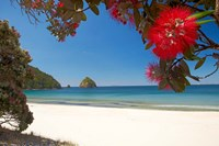 Framed Pohutukawa Tree in Bloom and New Chums Beach, North Island, New Zealand