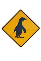 Framed Penguin Warning Sign, New Zealand