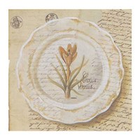 Framed Assiette, Crocus vermus