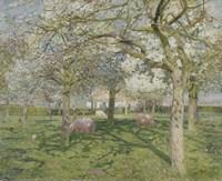 Framed Orchard in Springtime 1902