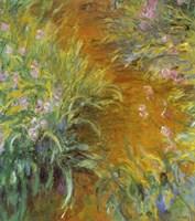 Framed Path through the Irises