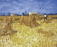 Framed Cornfield in Provence