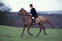 Framed Horseback riding, Leicestershire, England