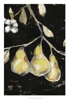 Framed Fresh Pears I