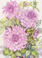 Framed Lavender Dahlias