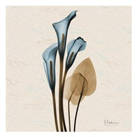 Framed Calla Lily Blue Brown H36
