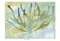 Framed Seafoam Coral I