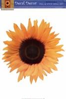 Framed Single Sunflower
