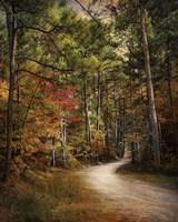 Framed Autumn Forest 2