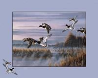 Framed Ducks In Flight 1