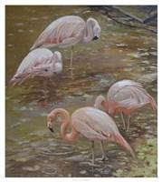Framed Pink Passion